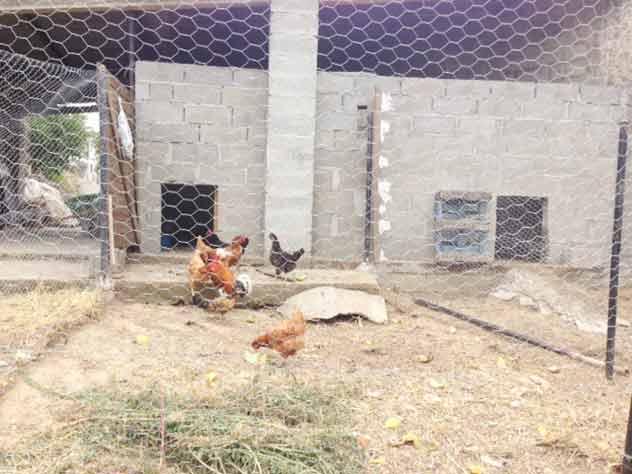 granja escuela leon